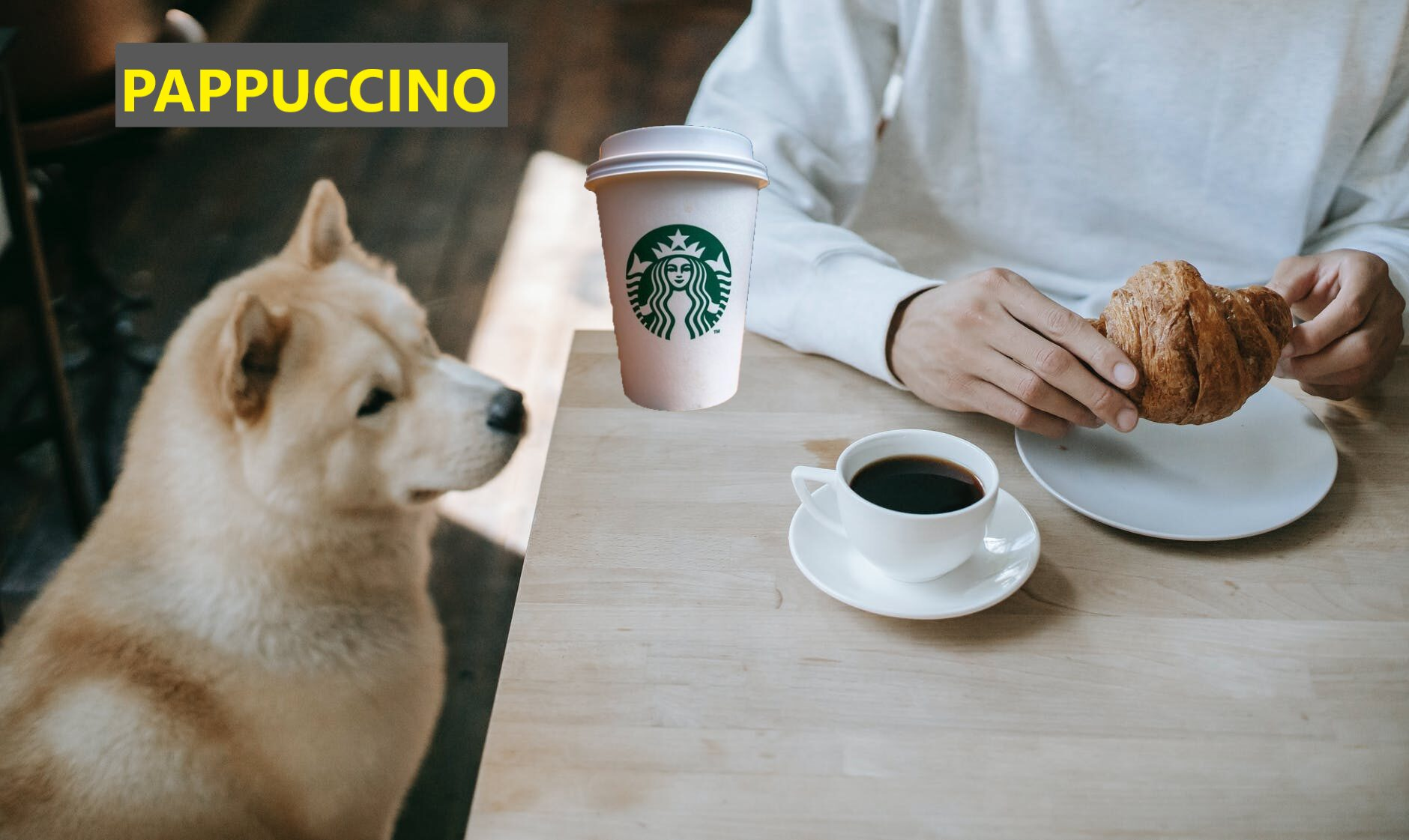 Dog looking at Pappuccino